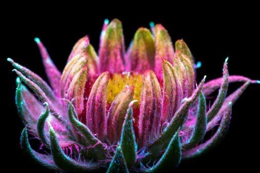 flower.ciclovivo2-768x511